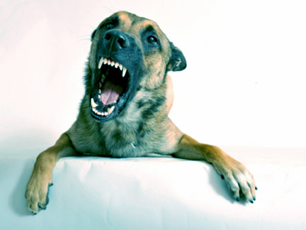 When dangerous animals attack, contact an Amarillo Dog Bite Attorney to learn your rights.